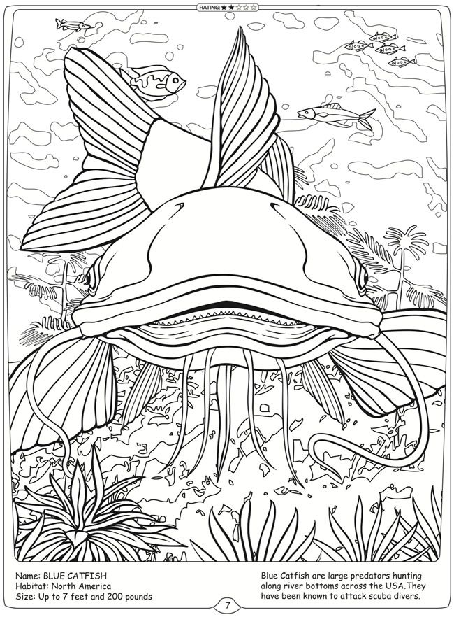 Welcome To Dover Publications River Monsters Of The World Blue Catfish Dover Coloring Pages Animal Coloring Pages Coloring Pages