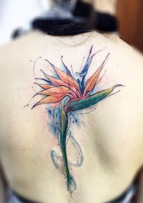 Lincoln Obs Bird Of Paradise Tattoo Tattoos Paradise Flowers