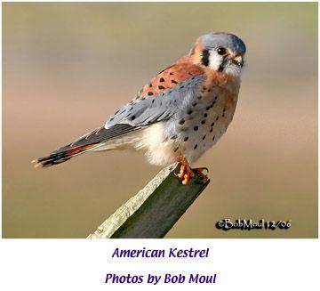 Bird · Indiana Backyard ...