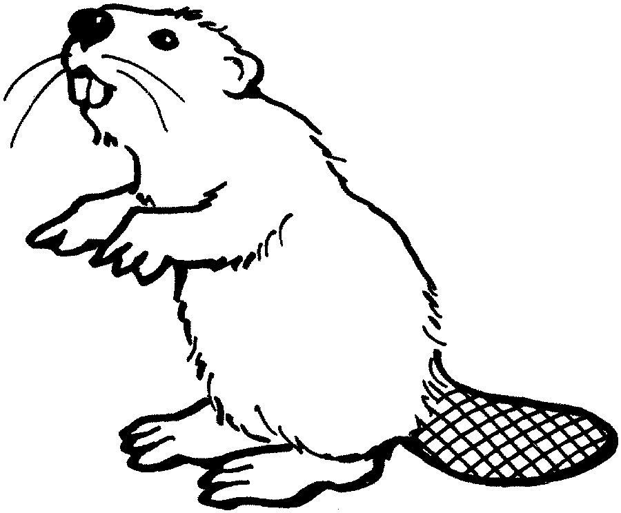 Beaver Drawings Coloring Home Animals Beaver Free Coloring