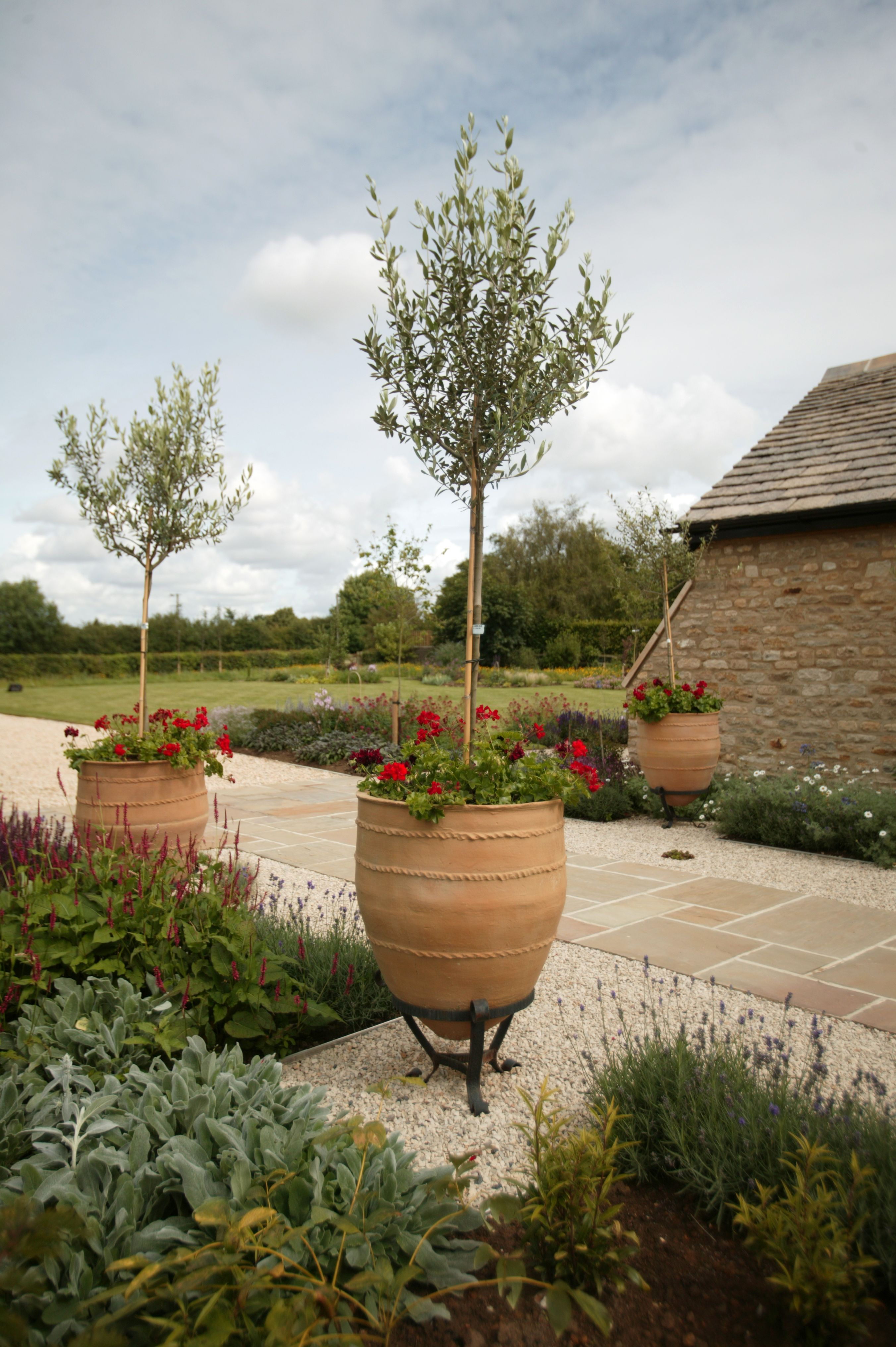 Country Garden Design with Mediterranean Planting and Olive Trees ...