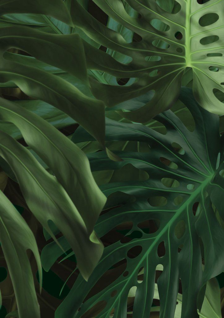 Botanical Wallpaper Monstera by KEK Amsterdam