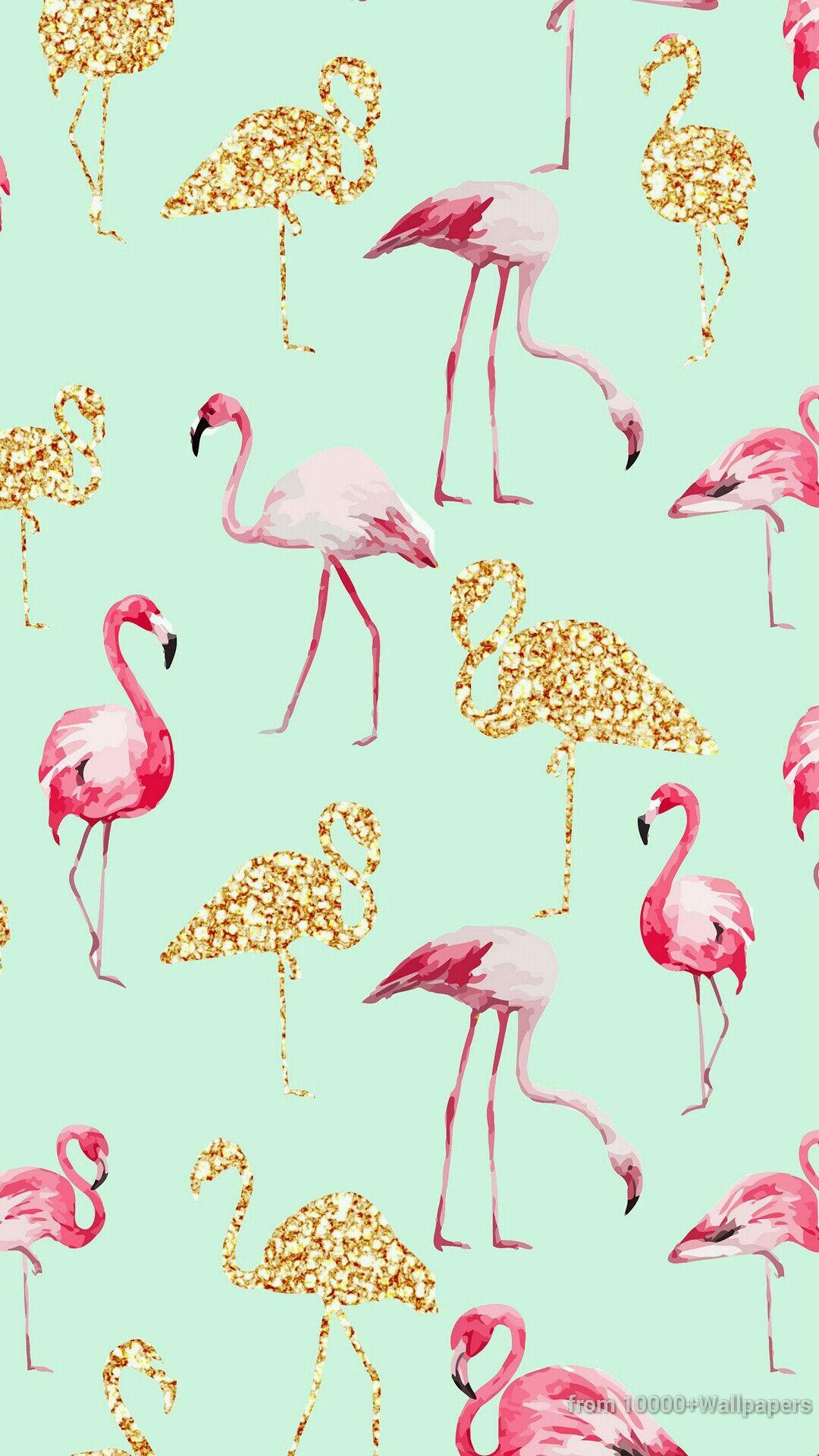 Flamingo Wallpaper Border Impremedia Net