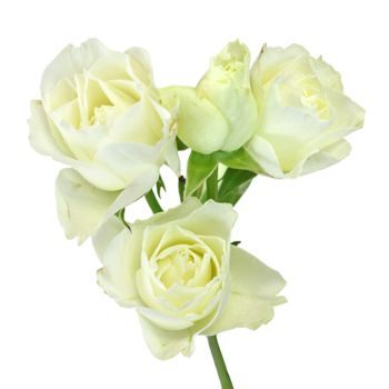 White spray bulk roses steven s sprays and weddings fiftyflowers white spray bulk roses mightylinksfo