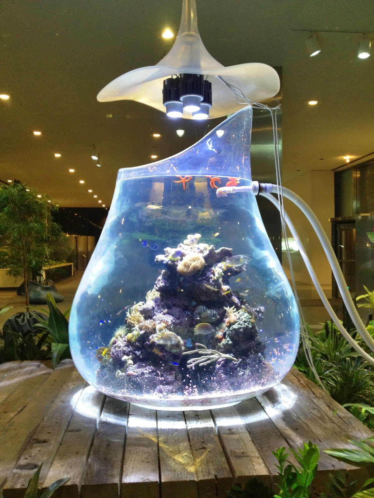 Aquarium Living Room Decor: Wondrous Aquarium-in-the-round By Paula Hayes