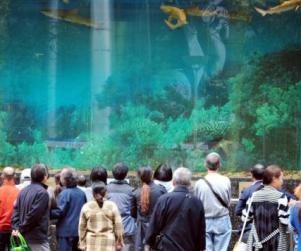 Video: Shark Aquarium Breaks Inside Mall http://www.opposingviews.com/i/society/animal-rights/video-shark-aquarium-breaks-inside-mall