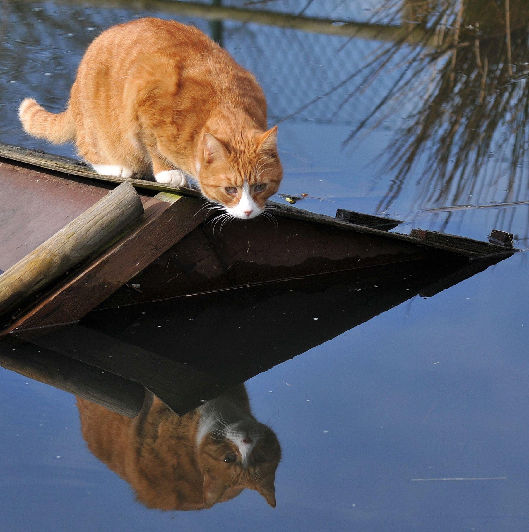 Muffi Reflection Cat shadow, Orange cats, Kittens cutest