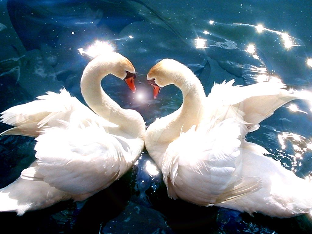 Spring Is Time For Love Beautiful Pictures And One Poem Animals Beautiful Swan Love Love Birds