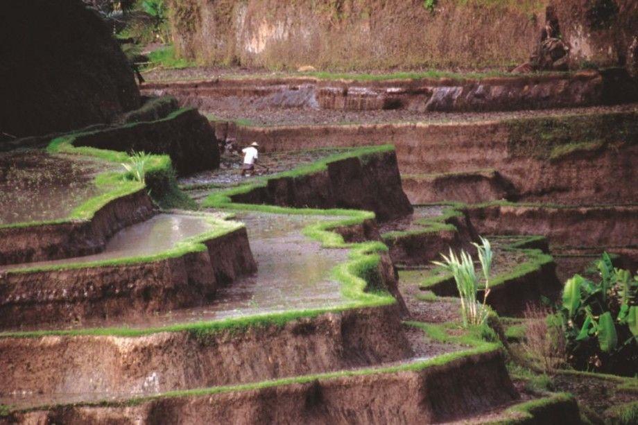 Meravigliose Risaie A Terrazza A Java In Indonesia