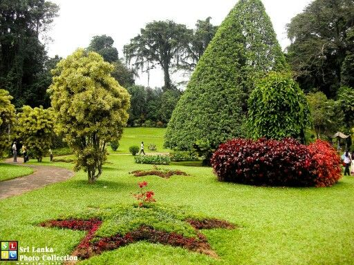 Royal botanical gardens peradeniya sri lanka pinterest for Sri lankan landscaping plants