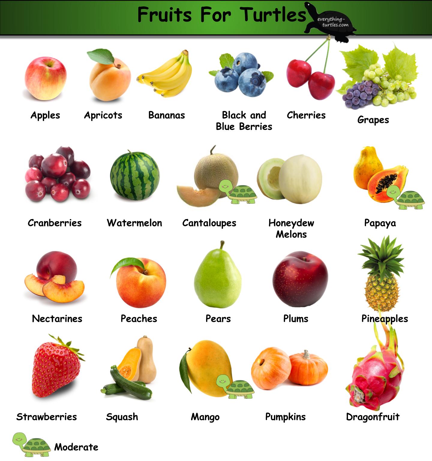 Fruits For Turtles Tortoise Food Pet Turtle Care Box Turtle Food