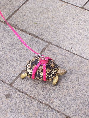 turtles on a lesh | turtle_leash.jpg