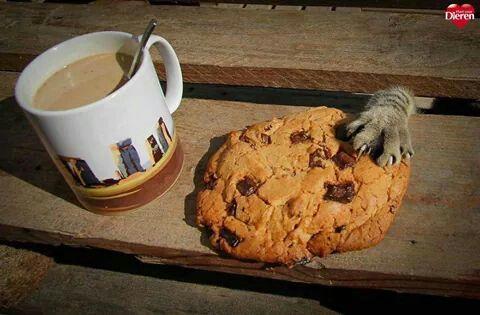 Kleine koekjesdief...ahhh