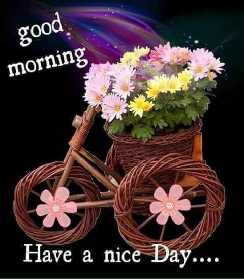 Good Morning Have A Nice Day Good Morning Good Morning Morning