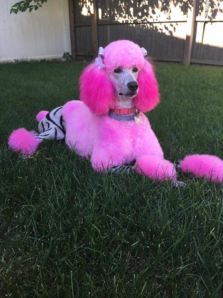 Opawz Pet Hair Dye Grooming By Stephanie Denapoli Cute Animals