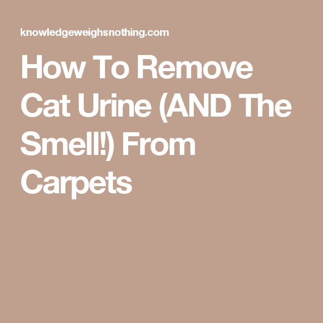 How To Remove Cat Urine And The Smell From Carpets