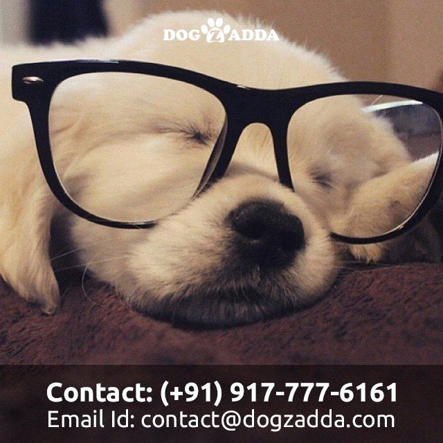 An elite Destination For the Pet Buying & Pet Service in
