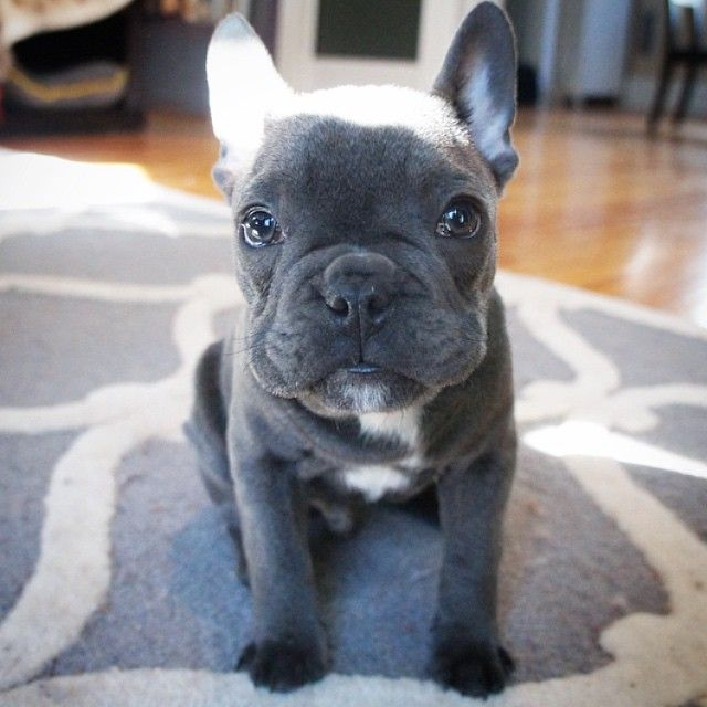 Puppy Cheeks Ready To Be Pinched Puppiesforall Huffpostgram