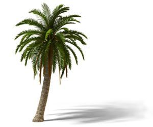Homemade Palm Tree Fertilizer