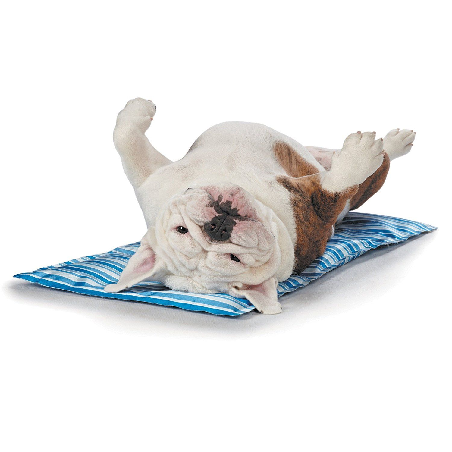 Amazon Com Cool Pup Mats Comfortable And Innovative Mats Designed To Keep Dogs Cool On Even The Hottest Days Pet Bed Mats Dog Cooling Mat Your Dog