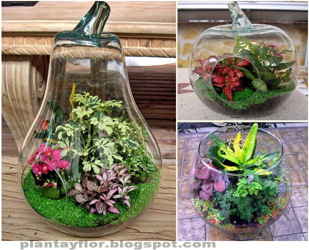 Jardines miniatura en vidrio buscar con google for Jardines en miniatura