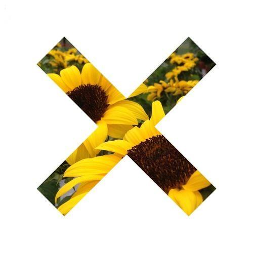 xx sunflower