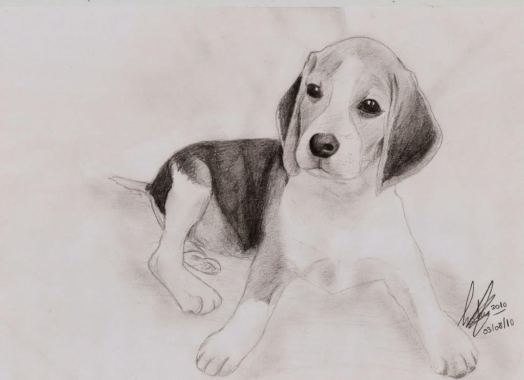 Dibujos A Lapiz Perros Dibujos A Lapiz Dibujos De Animales Dibujos