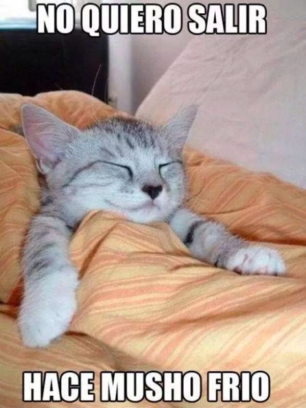 Hace Mucho Frio Cats Funny Cats Funny Cat Pictures