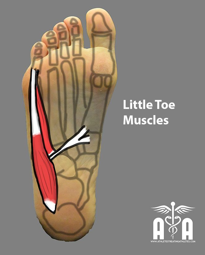 littletoe | anatomy | Pinterest | Anatomy, Reflexology and Athlete