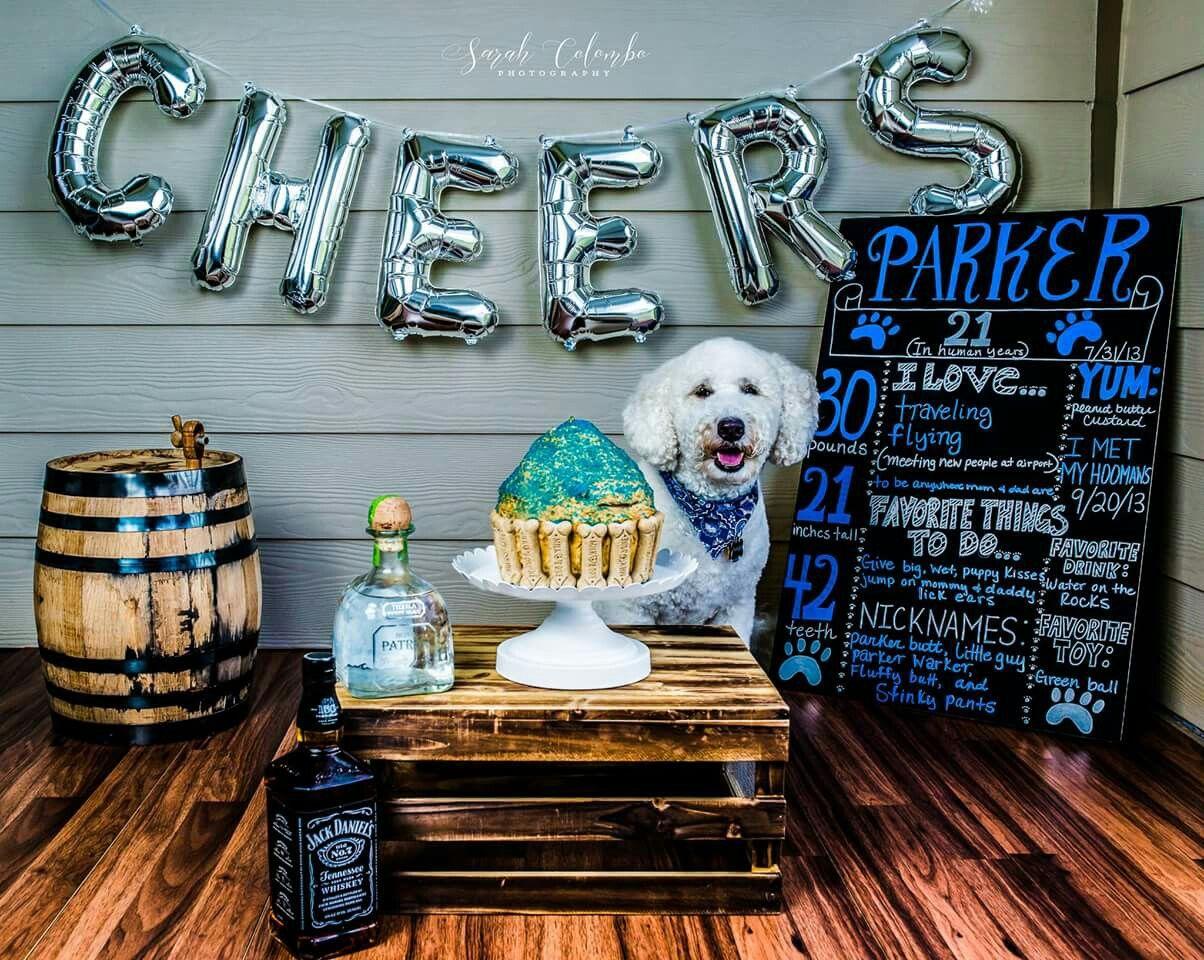 Dog birthday cake smash by Sarah Colombo Photography dog birthday