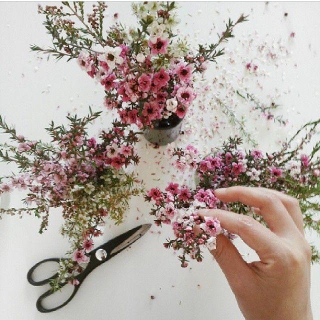 Flores de Pessego #flowers