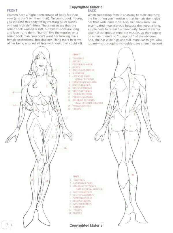 Pin by DAASR on how to draw | Pinterest | Anatomy, Drawings and Art ...