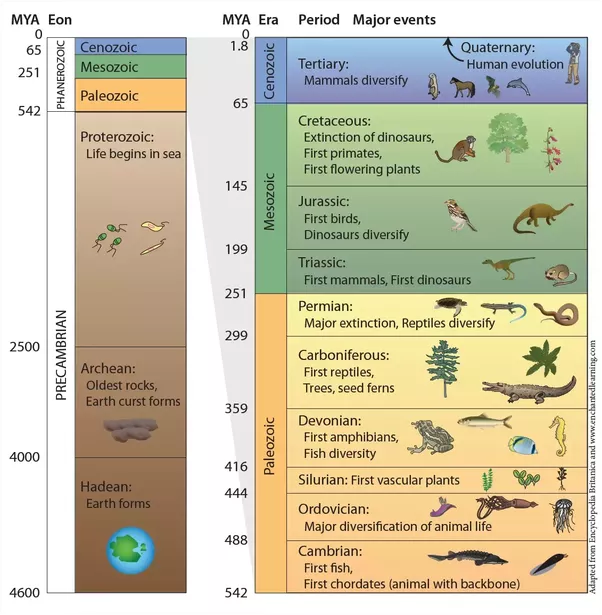 10 Interesting Facts About The Geological Time Scale Paleontology World Geologic Time Scale Geology Earth Science Lessons
