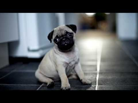 Abraham Hicks A Thrilling Life Experience Youtube Cute Pugs