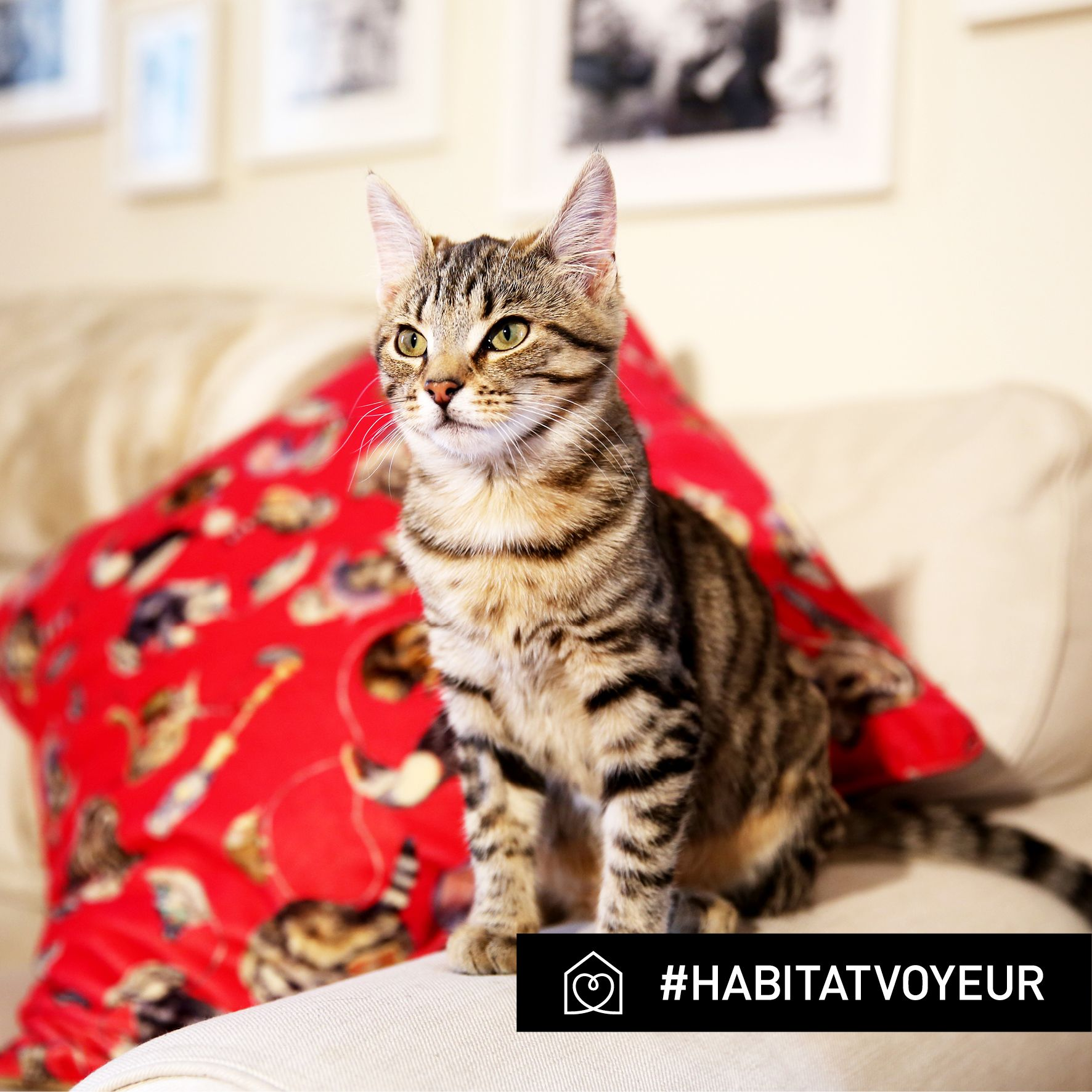 Pandora Sykes is Fashion Features Editor and Wardrobe Mistress at The Sunday Times Style. She lives in Notting Hill with her fiancée, flatmate and their kitten, Indi. Take a sneak peek around her home...#HabitatVoyeur