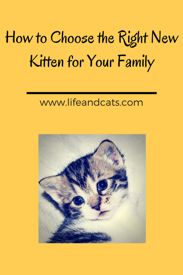 How To Choose The Right Happy Healthy New Kitten For Your Family Kittens Cat Care Buy A Kitten