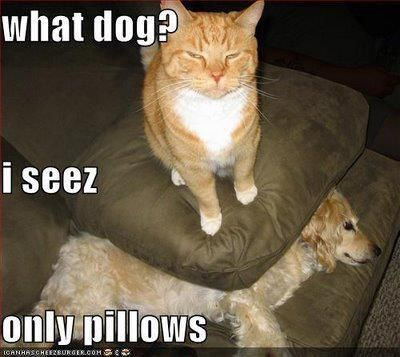 Cats Rule Dogs Drool Cat Quotes Funny Evil Cat Funny Cats And Dogs