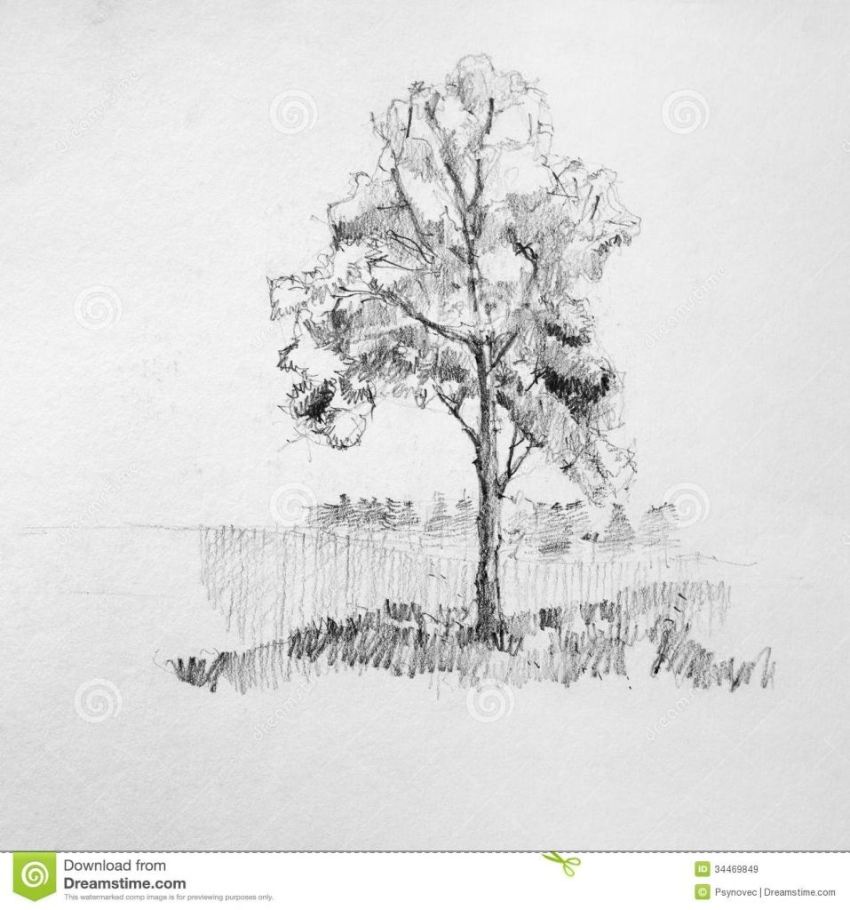 Pencil sketch trees tree sketch royalty free stock images image 34469849