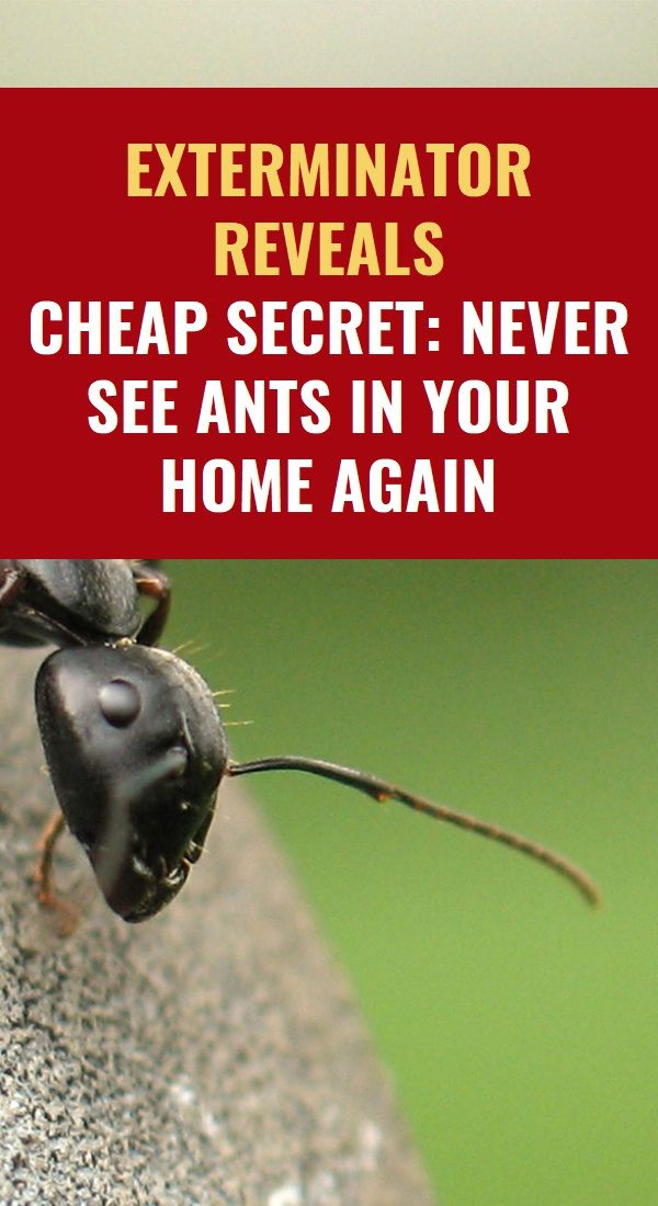 Exterminator Reveals Cheap Secret Never See Ants In Your Home Again Herbal Remedies Health Screening Health Knowledge