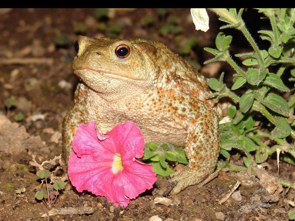 The Toad A Short Story By Bob Mann Read Online At Theme