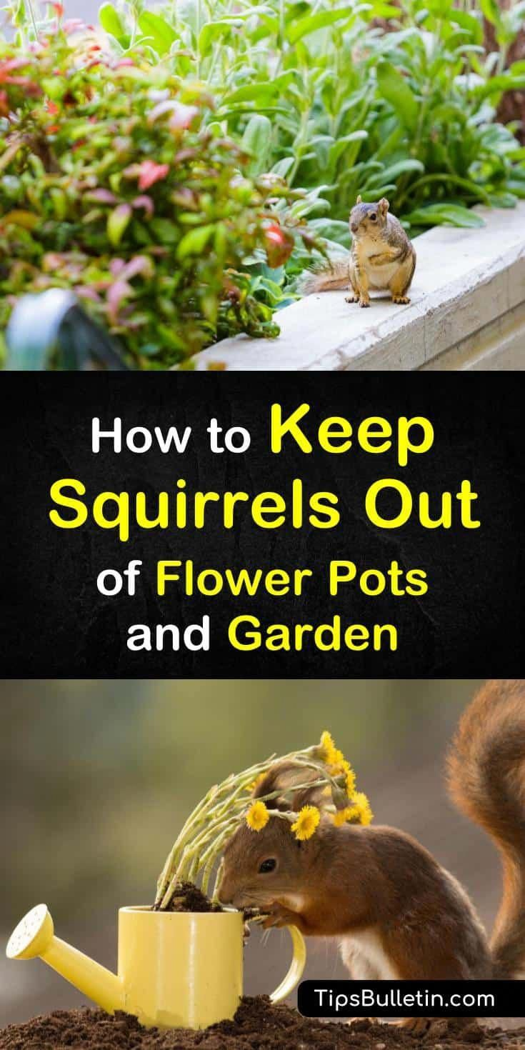 Handson tips for how to keep squirrels out of flower pots