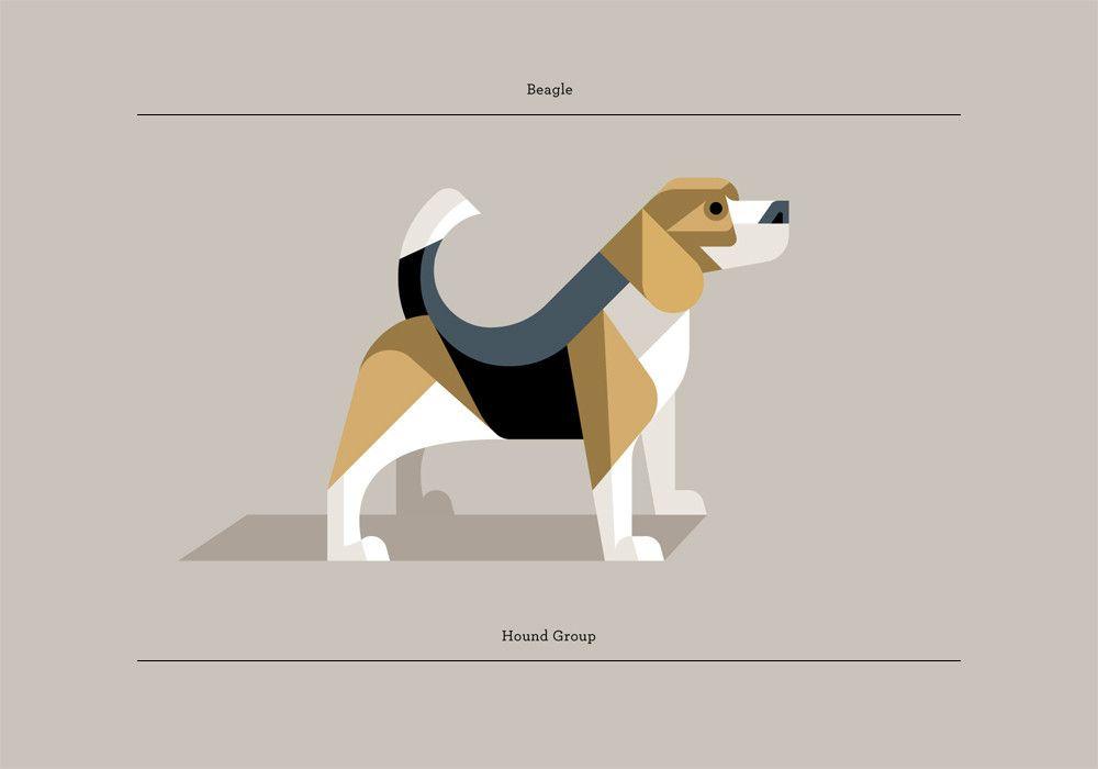 Beagle Hond Tekeningen Illustraties Hondenrassen