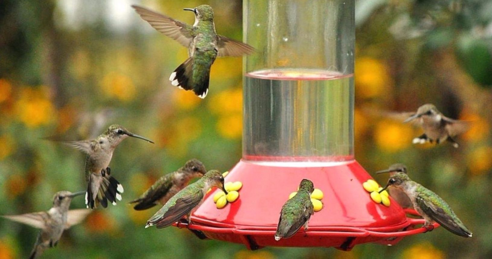 how to keep bees away from your hummingbird feeder