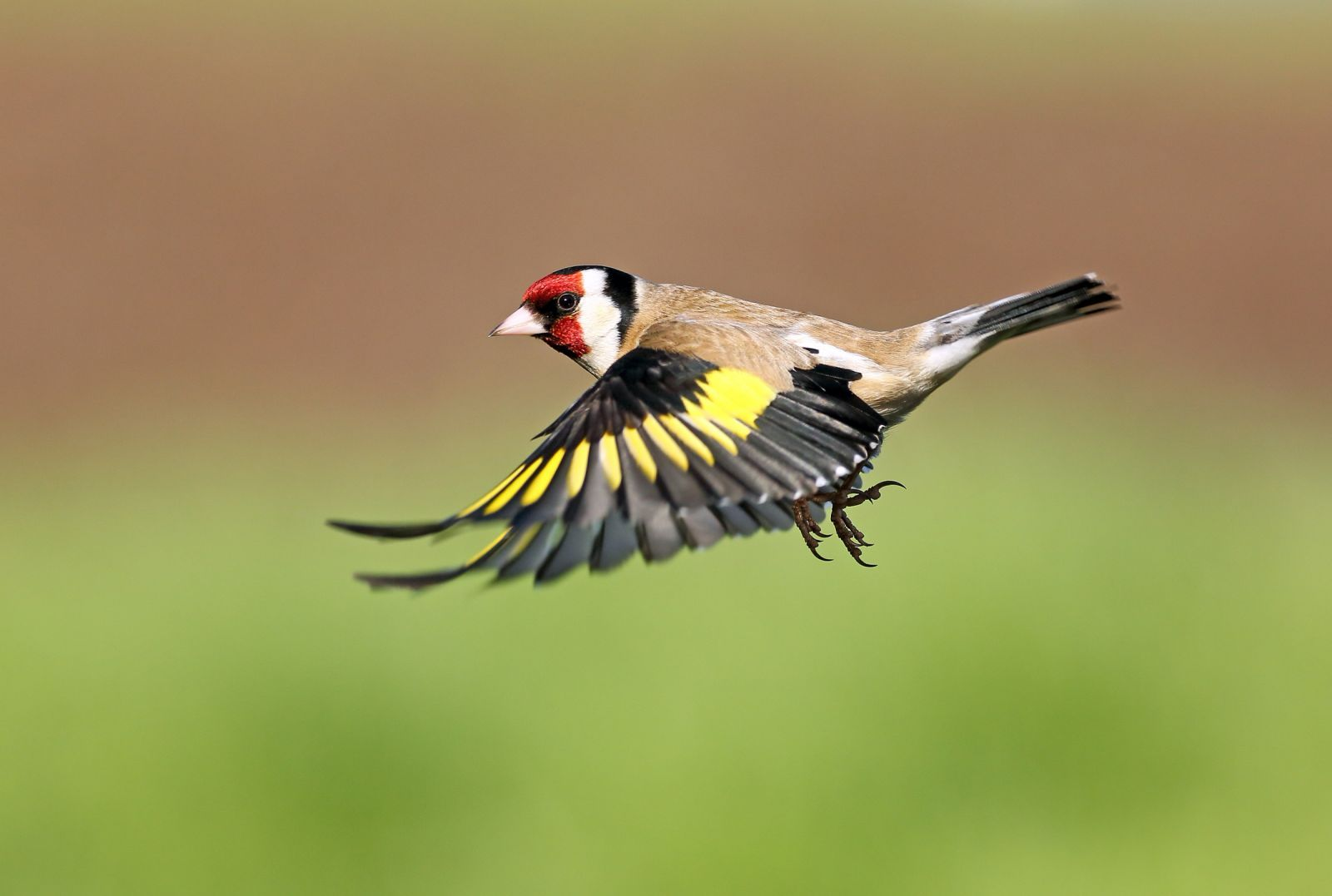 терпения картинки птиц года домой