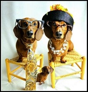 Find The Right Dog Breed For You By Following These Tips Weiner Dog Dachshund Love Weenie Dogs