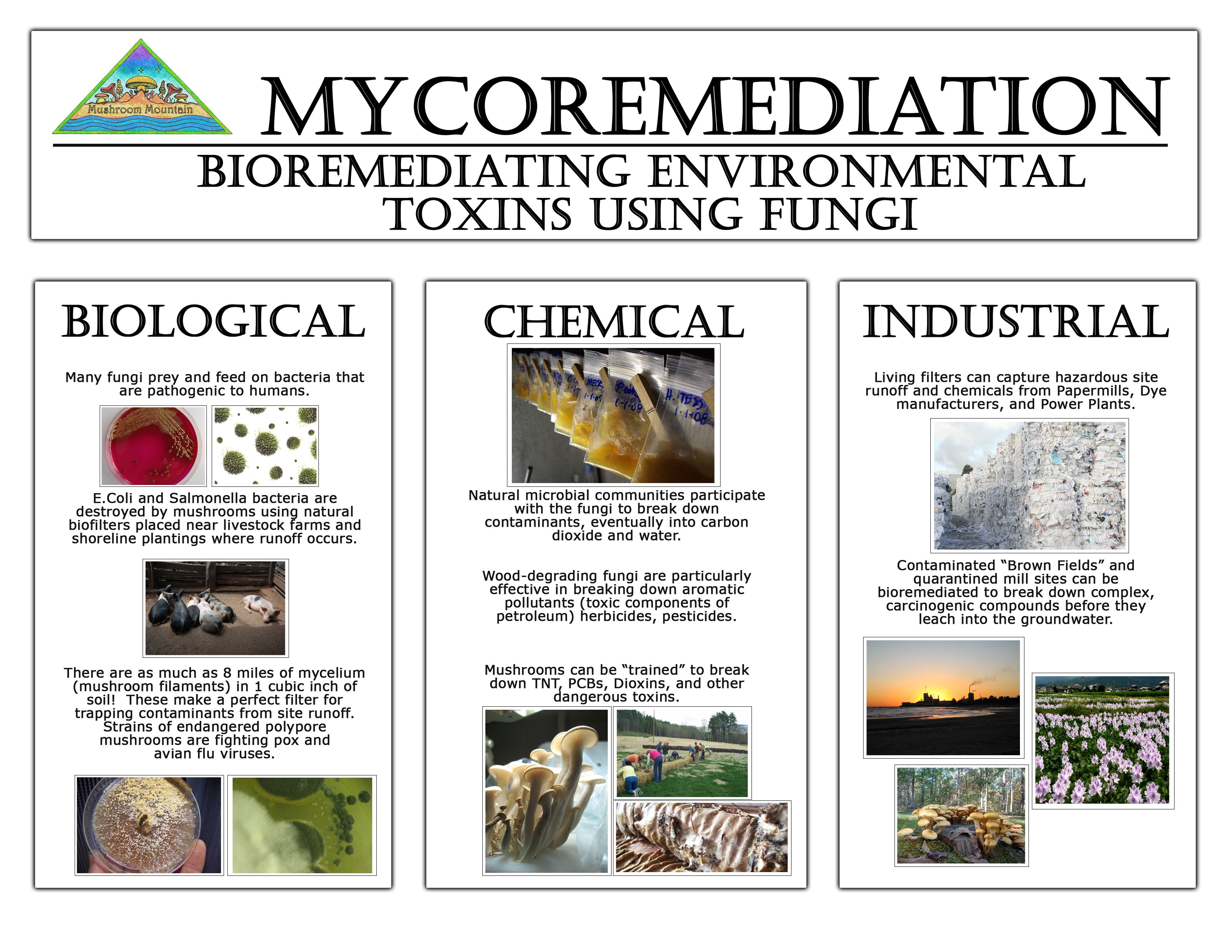 what are the types of bioremediation  quora mushroom draw and label