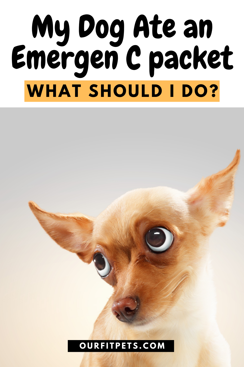My Dog Ate An Emergen C Packet What Should I Do Our Fit Pets Dog Eating Cat Advice Dogs