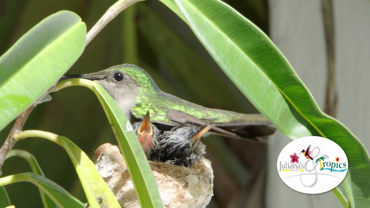 Humming Birds Feeding update! Birds, Bird feeders