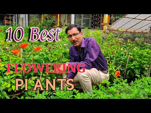 10 Best Permanent Flowering Plants You Can Grow In 400 x 300