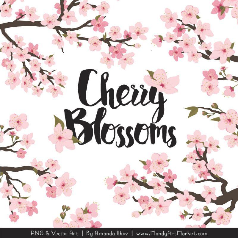 Free Cherry Blossom Clipart Vectors Mandy Art Market Cherry Blossom Watercolor Cherry Blossom Clip Art